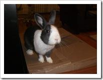 shimi-shayna-bunny-rabbits (4)