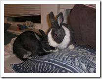 shimi-shayna-bunny-rabbits